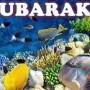 Eib Mubarak